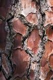 Vieille écorce d'arbre en bois images stock
