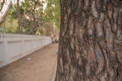 Vieille écorce d'arbre en bois pour le fond Photo libre de droits