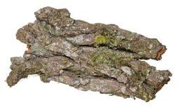 Vieille écorce de chêne Image libre de droits