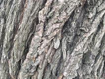 Vieille écorce de saule Texture en bois élément pour la conception image stock