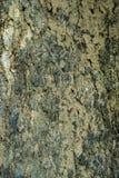Vieille écorce en bois image libre de droits