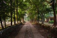 Vieille allée d'arbre en parc Photographie stock libre de droits
