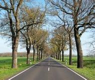 Vieille allée de chêne au printemps Image stock
