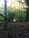 Vieille barrière dans Forrest Photo stock
