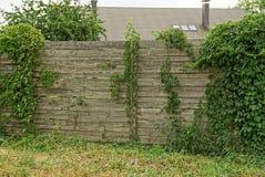 Vieille barrière en bois grise envahie avec les plantes vertes et l'herbe Image stock