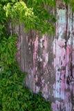 Vieille barrière en bois peinte par peinture ébréchée Wall Rusty Nails avec Gre Photographie stock libre de droits
