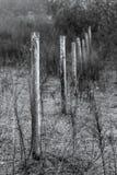 Vieille barrière Posts dans un pâturage Photo libre de droits