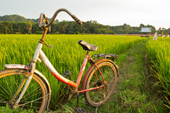 Vieille bicyclette avec Paddy Field Background Image stock