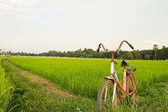 Vieille bicyclette avec Paddy Field Background Images libres de droits