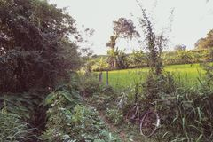 Vieille bicyclette devant un petit chemin dans Sri Lanka photographie stock