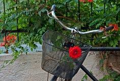 Vieille bicyclette rouillée avec des roses dans le panier avant 1 Photo stock