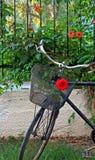 Vieille bicyclette rouillée avec des roses dans le panier avant 4 photographie stock libre de droits