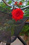 Vieille bicyclette rouillée avec des roses dans le panier avant 5 Image libre de droits