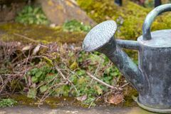 vieille boîte d'arrosage de cuivre dans le jardin Images stock