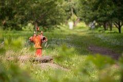 Vieille bouche d'incendie rouge de vintage sur le fond de forêt Fermez-vous, foyer de slelect avec la profondeur du champ photos libres de droits