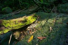 Vieille branche putréfiée échouée sur une roche photos stock
