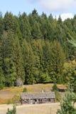 Vieille cabine de logarithme naturel dans les bois Image stock