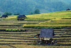Vieille carlingue dans des domaines de riz image stock