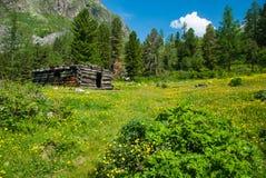 Vieille carlingue dans la forêt Photo stock
