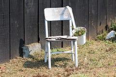 Vieille chaise délabrée blanche en bois avec le pot de fleur en métal utilisé comme décoration d'arrière-cour devant le mur en bo photo libre de droits