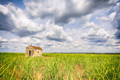 Vieille chapelle abandonnée à l'intérieur d'une plantation de canne à sucre au Brésil Photographie stock libre de droits