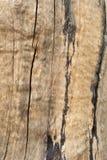 vieille configuration d'arbre photo stock