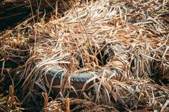 Vieille couverture de pneu laissée dans Autumn Grass sec Pneu utilisé laissé tomber en terre Catastrophe de déchets de concept d' photos stock