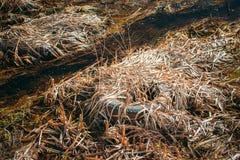 Vieille couverture de pneu laissée dans Autumn Grass sec Pneu utilisé laissé tomber en terre Catastrophe de déchets de concept d' image libre de droits