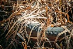 Vieille couverture de pneu laissée dans Autumn Grass sec Pneu utilisé laissé tomber en terre Catastrophe de déchets de concept d' image stock