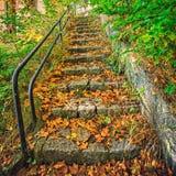 Vieille, envahie végétation, escaliers de granit Photos stock