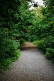 Vieille et foncée forêt Images stock