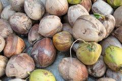 Vieille et jeune noix de coco Image stock