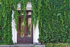 Vieille façade de maison couverte du raisin sauvage Photographie stock libre de droits