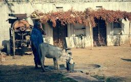 Vieille femelle aînée indienne Images libres de droits
