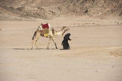 Vieille femme bédouine avec le chameau dans le désert Image libre de droits