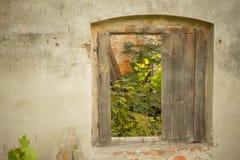 Vieille fenêtre avec l'usine Images libres de droits