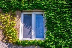 Vieille fenêtre de bâtiment encadrée par des feuilles de lierre photographie stock libre de droits