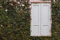 Vieille fenêtre en bois avec l'élevage de plante verte Photographie stock libre de droits