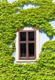 Vieille fenêtre encadrée par la vigne, Bamberg Photo libre de droits