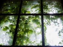 Vieille fenêtre enchantée Photo libre de droits
