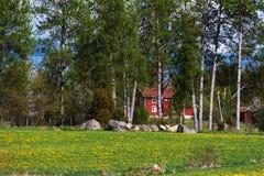 Vieille ferme en bois rouge derrière des bouleaux Photo stock