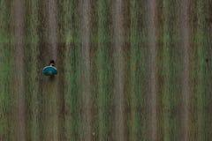 Vieille feuille verte de zinc déchirée photo stock