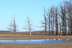 Vieille forêt de chênes photographie stock
