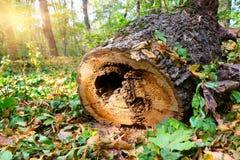 Vieille forêt en bois d'identifiez-vous photos stock