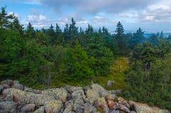 Vieille forêt verte avec le fond clair de ciel Photos stock