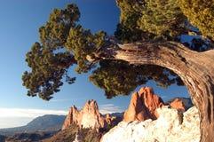 Vieille formation d'arbre et de roche Image stock