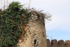 Vieille forteresse dans la ville de Signagi en Géorgie image libre de droits