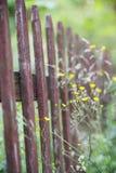 Vieille frontière de sécurité en bois et fleurs jaunes Photos stock
