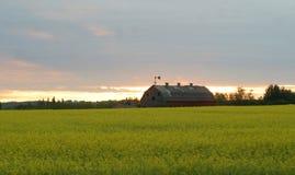Vieille grange dans le domaine de canola Image stock
