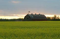 Vieille grange dans le domaine de canola Photos libres de droits